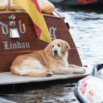 Hund beim Wassersportfest 2017