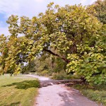 Treptower Park – Heidegarten