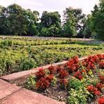 Treptower Park – Sommerblumengarten