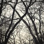 Bäume kreuzen sich, Müggelberge Berlin