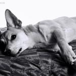 Hund im Studio | Nero
