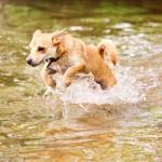 Nero beim schwimmen in Schmöckwitz