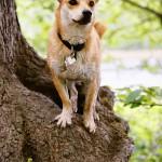 Nero auf einem Baum im Grunewald