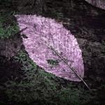 In the Woods, philipp-messinger.com